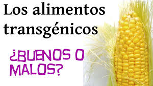 EstherVazquezCarracedo-Transgenicos